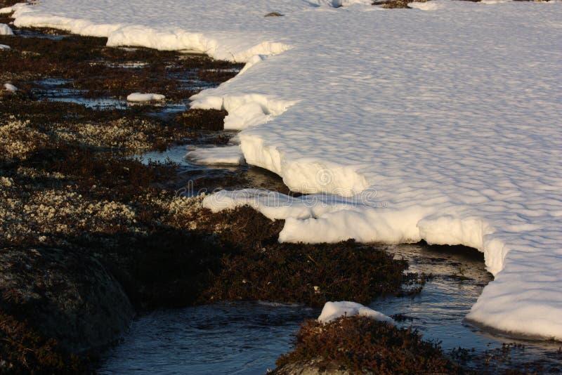 Śnieg w wiośnie tundra zdjęcia royalty free