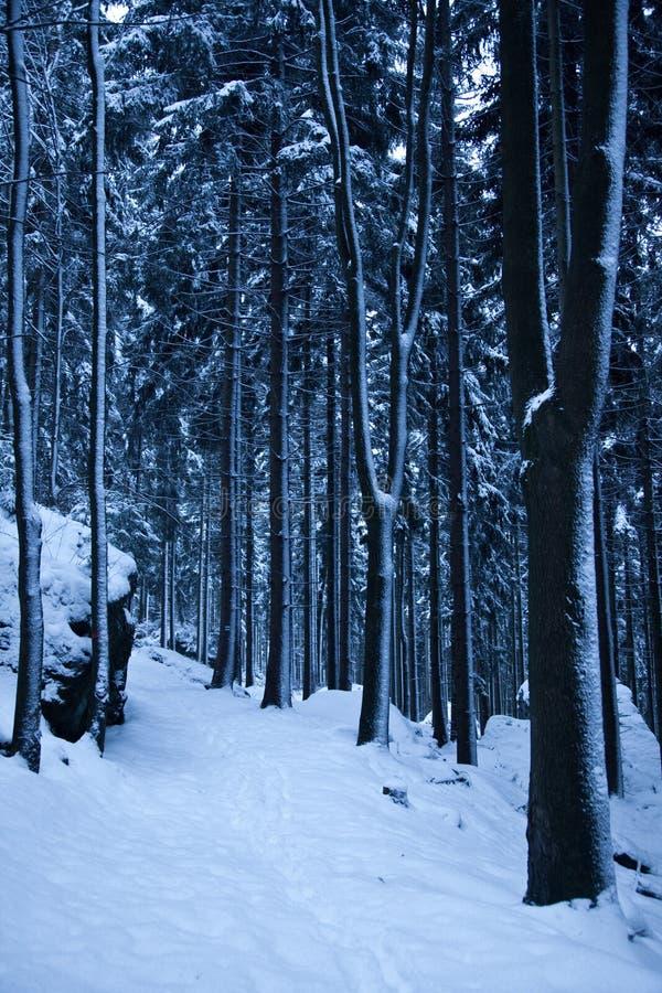 Śnieg zakrywał ścieżkę w ciemnym lesie obrazy stock