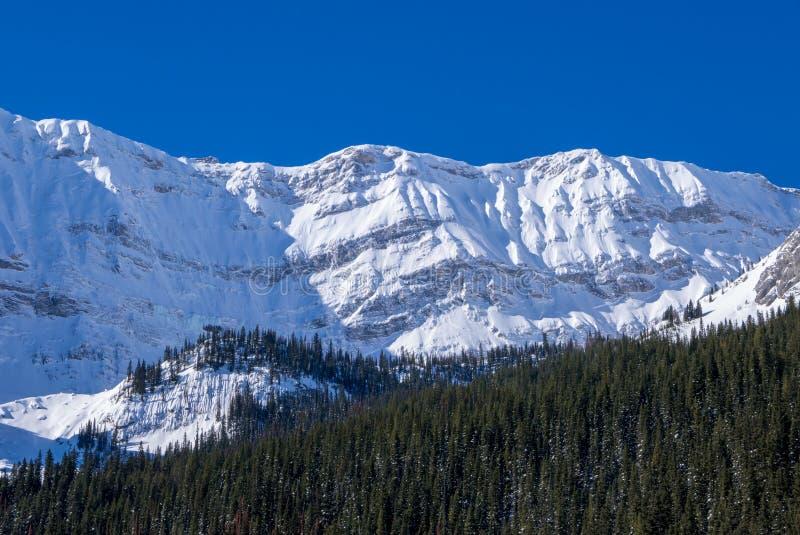 Śnieg zakrywał górę na jasnym błękitnym zima dniu w górach przy Czarnym książe Cirque w Kananaskis, Alberta zdjęcie royalty free