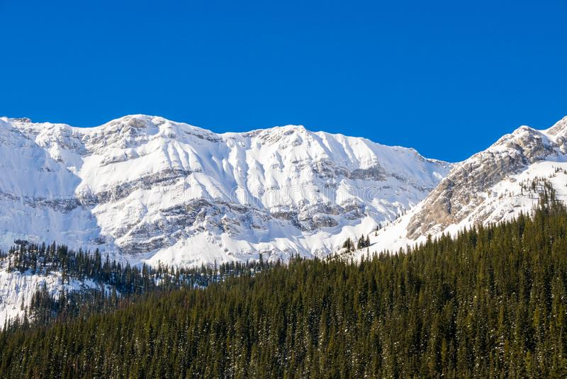 Śnieg zakrywał górę na jasnym błękitnym zima dniu w górach przy Czarnym książe Cirque w Kananaskis, Alberta zdjęcie stock