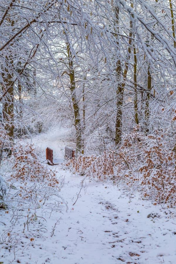 Śnieg zakrywał lasowego ślad z drewnianym footbridge l fotografia stock