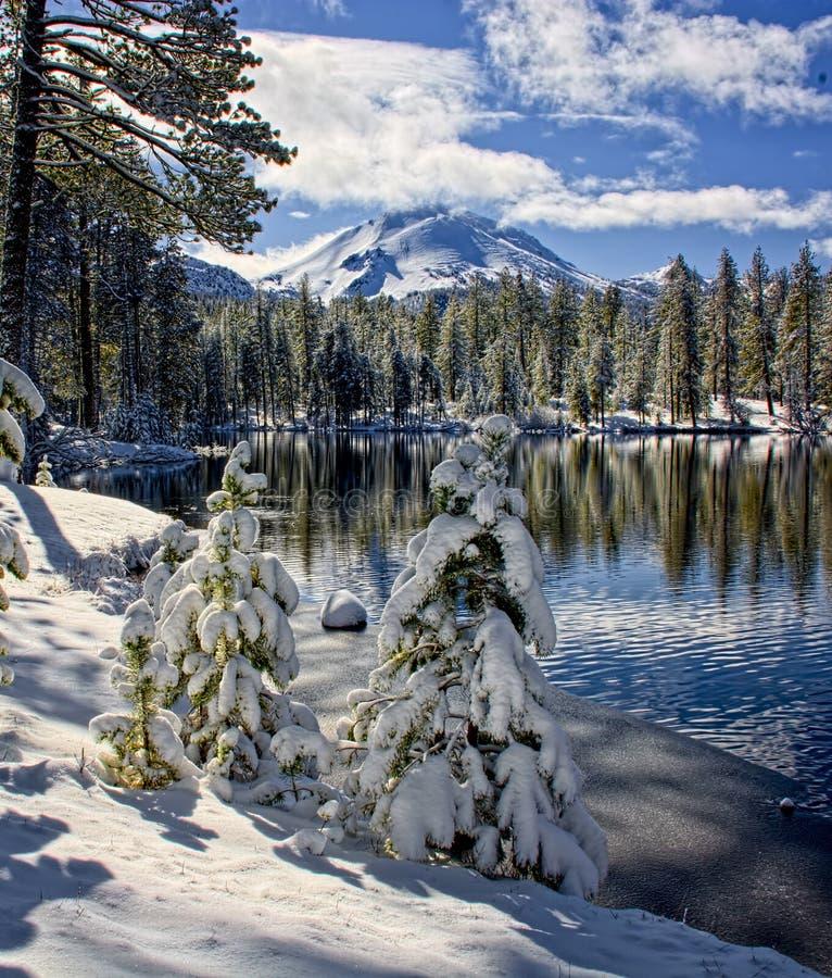 Śnieg zakrywał sosny wzdłuż Odbicie jeziora, Lassen park narodowy fotografia royalty free