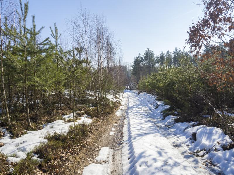 Śnieg zakrywająca śródpolna brud ścieżka w zima lesie z świerczyną i sosnami, krajobraz przy słonecznym dniem, niebieski zdjęcia stock