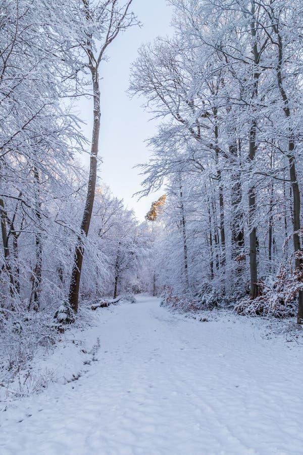 Śnieg zakrywająca droga przez mroźnego lasu zdjęcie stock