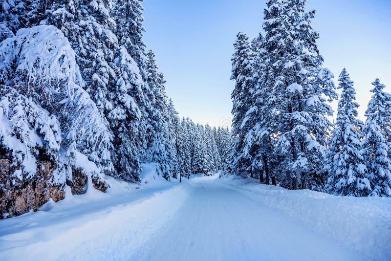 Śnieg zakrywająca droga w górach Montenegro zdjęcie royalty free