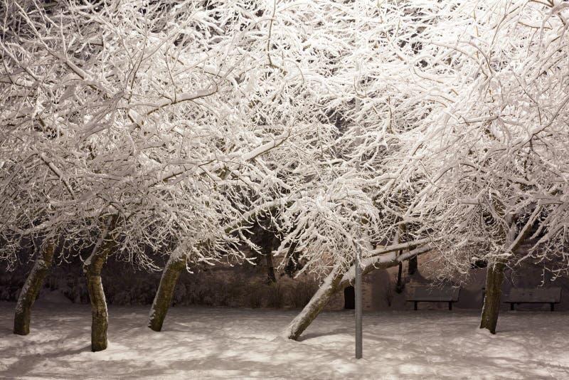Śnieg zakrywająca drzewa miasta parka noc zdjęcie stock
