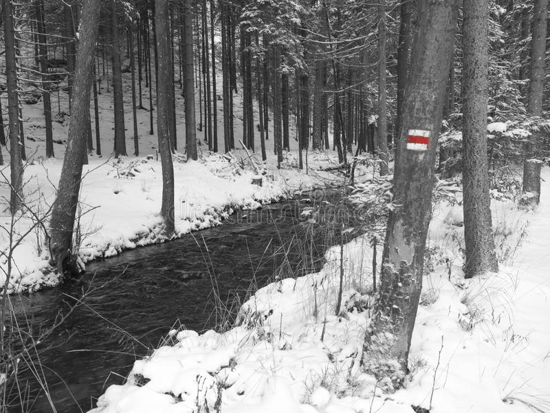 Śnieg zakrywająca las wody strumienia zatoczka z drzewami, rozgałęzia się i kamienie, idylliczny zima krajobraz w czarny i biały  fotografia royalty free