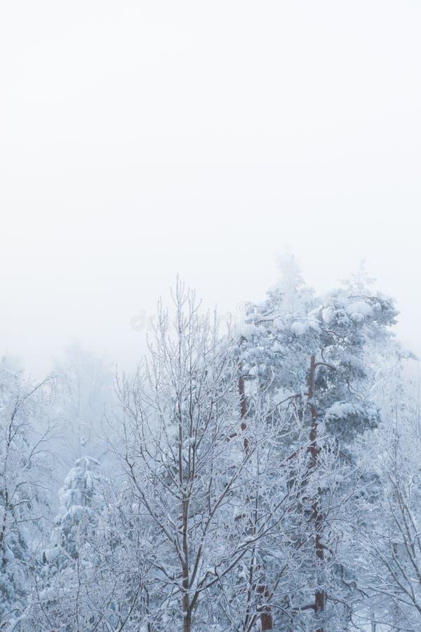 Śnieg zakrywająca mgła i drzewa obrazy royalty free