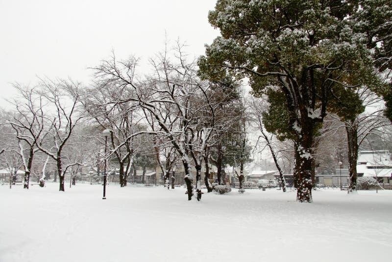 Śnieg zakrywająca ziemia zdjęcia stock