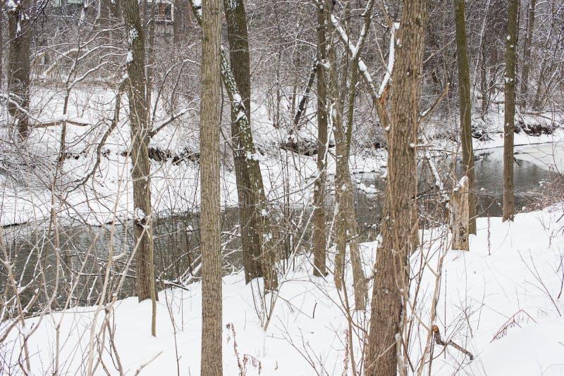 Śnieg zakrywający las z małym strumieniem obraz royalty free