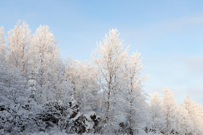 Śnieg zakrywający niebo i drzewa zdjęcie stock