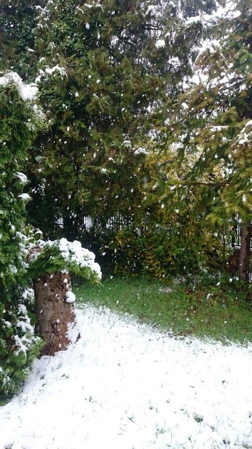 Śnieg zakrywający ogród w Kwietniu obraz stock