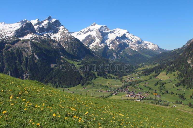Śniegi nakrywający wildflowers i góry zdjęcia stock