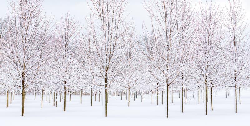Śniegi pakujący zakrywający drzewa zdjęcie royalty free