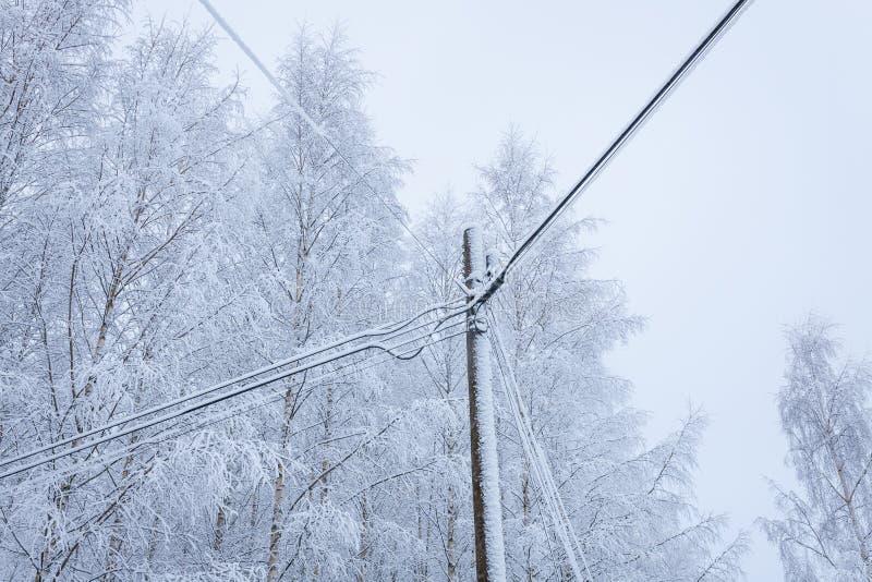 Śniegi zakrywający drzewa i linie energetyczne zdjęcie stock