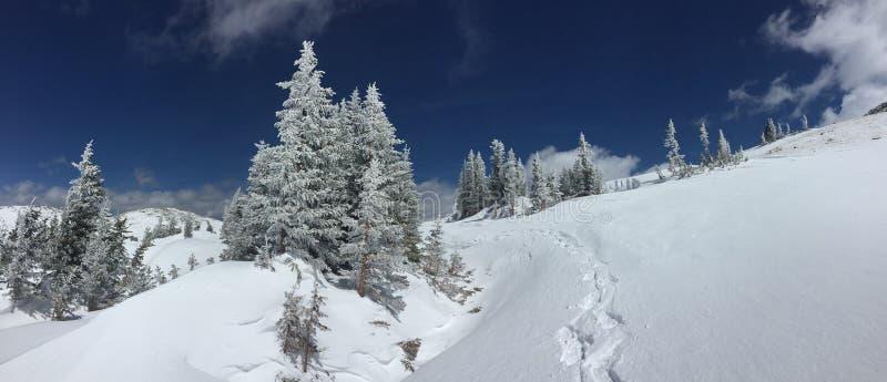 Śniegi zakrywający drzewa przy Mongomery Przechodzą, Kolorado fotografia stock