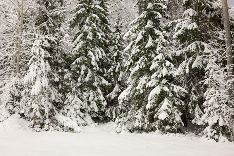 Śniegi zakrywający drzewa przy nocą zdjęcia stock