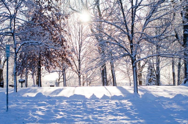 Śniegi zakrywający drzewa w świetle słonecznym zdjęcia stock