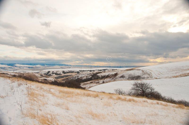 Śniegi zakrywający wzgórza Palouse region zdjęcia royalty free