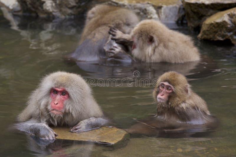 Śniegu Jigokudani małpia wchodzić do gorąca wiosna zdjęcie stock