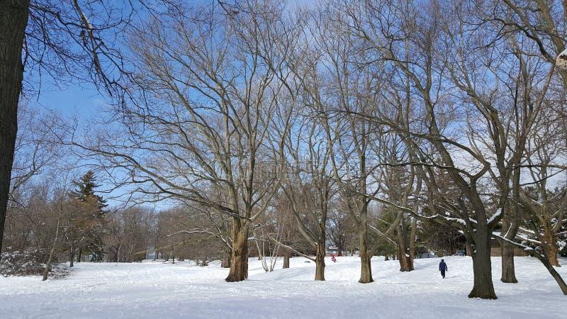 Śniegu park zdjęcie stock