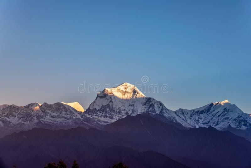 Śniegu szczyt Dhaulagiri góra przy zmierzchem w himalajach w Nepal zdjęcie royalty free