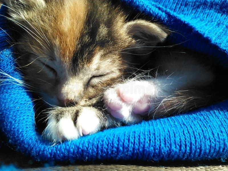 śpiący fotografia stock