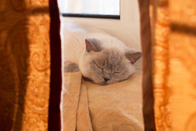 Śpiący kot Śmieszna sypialna kot fotografia sypialny kot fotografia royalty free