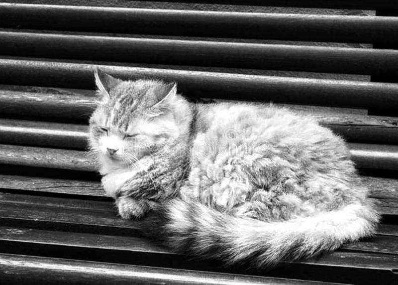 Śpiący kot w kraju dzwoniącym & x22; cat& x27; s country& x22; zdjęcia stock