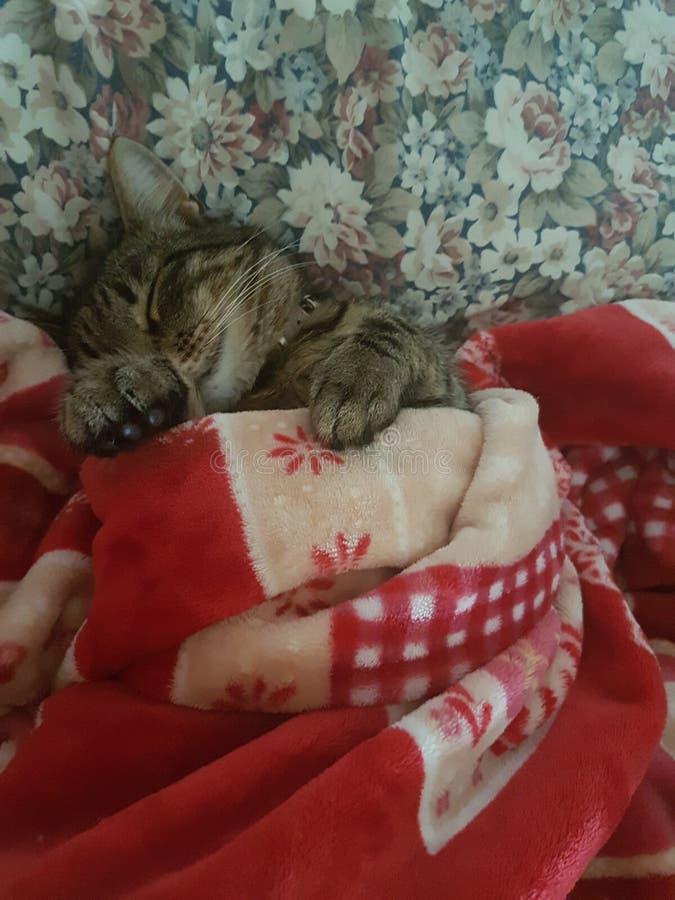 Śpiący owłosiony dziecko zdjęcia stock