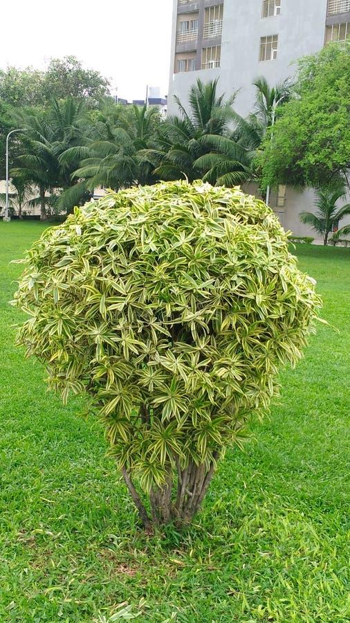 Śródpolna dekoracja zieloną rośliną zdjęcia royalty free