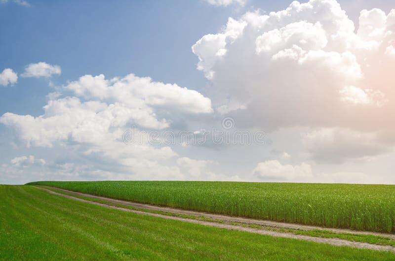 Śródpolna droga blisko pola młoda banatka Rolniczy Poj?cie zdjęcia royalty free