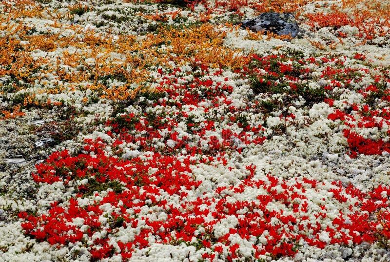 śródpolna jesień tundra obrazy stock