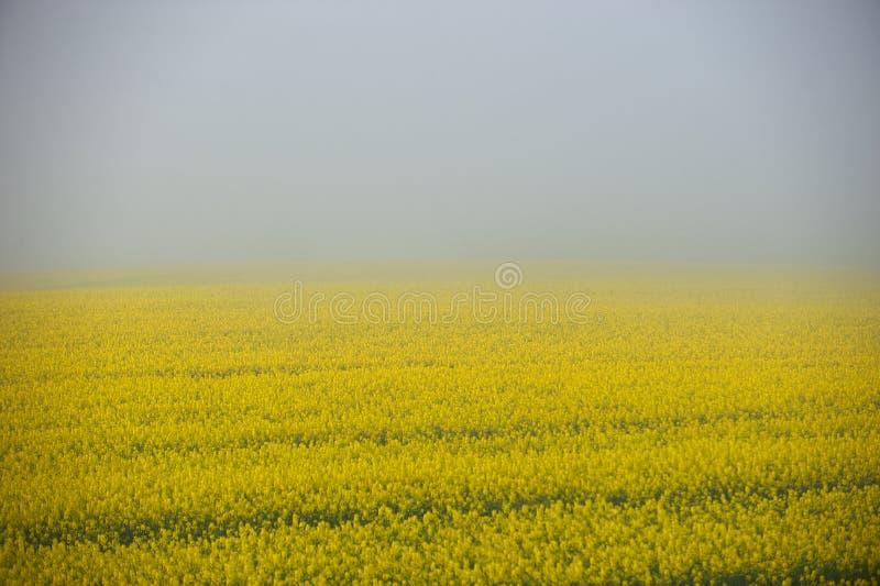 śródpolna mgła obraz royalty free