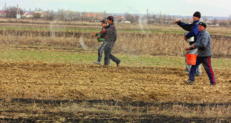 Śródpolna praca w obszarach wiejskich Transcarpathia w wiośnie zdjęcie stock
