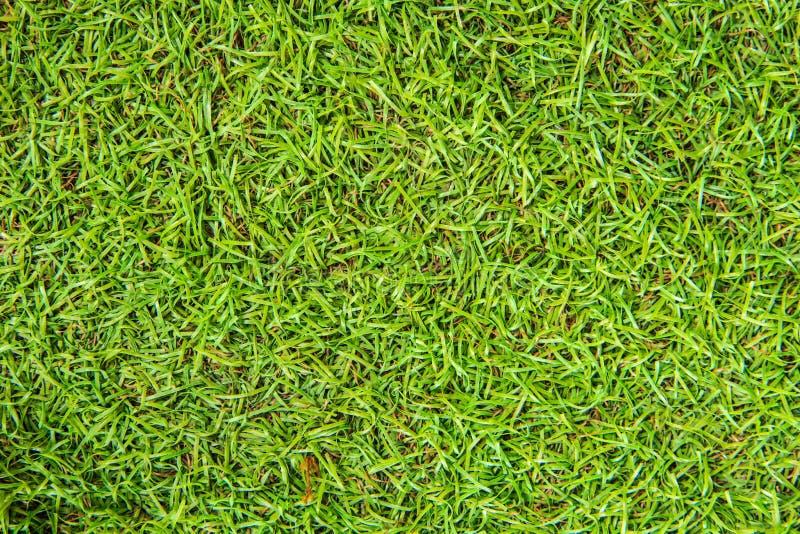 Śródpolna trawy zieleń, naturalny tło obrazy royalty free
