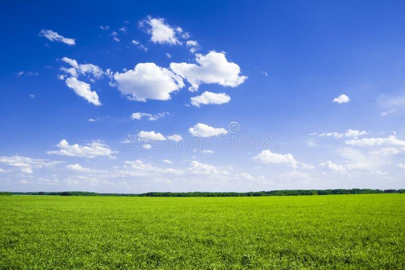 śródpolna zieleń zdjęcia royalty free