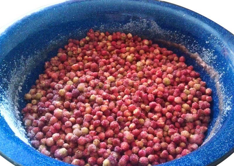 Śródpolne truskawki kropić z cukrowymi kłamstwami w błękicie emaliowali basen Kulinarny d?em Przerobowe dzikie jagody w domu zebr zdjęcia stock
