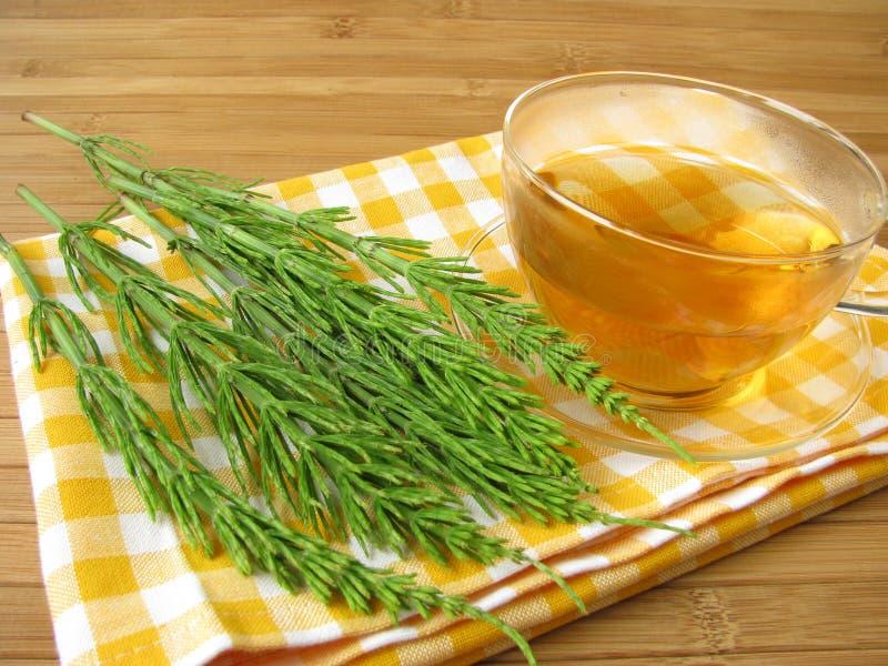 śródpolnego horsetail herbata zdjęcie stock