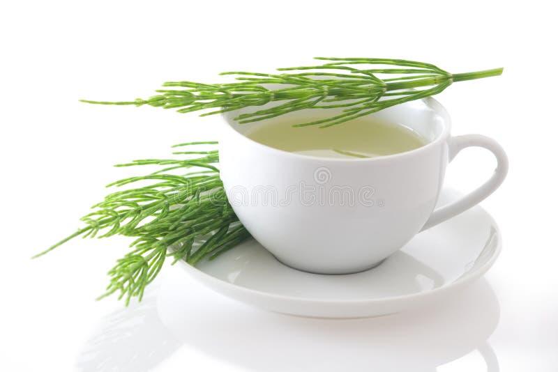 Śródpolnego horsetail herbata odizolowywająca (Equisetum arvense) obrazy stock