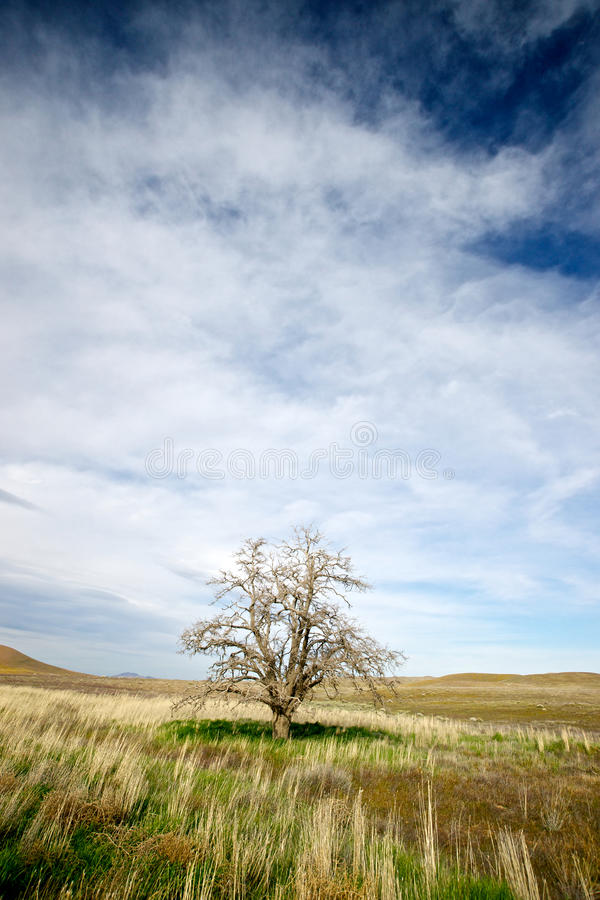 śródpolnej trawy samotny drzewo zdjęcie stock
