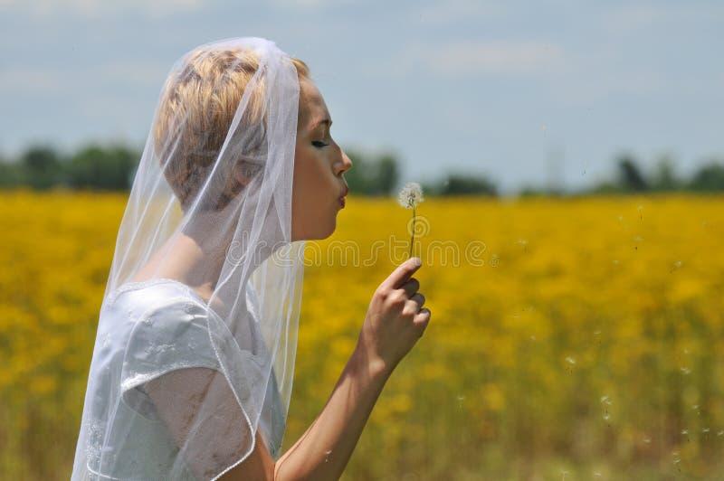 śródpolni panna młoda kwiaty zdjęcie stock