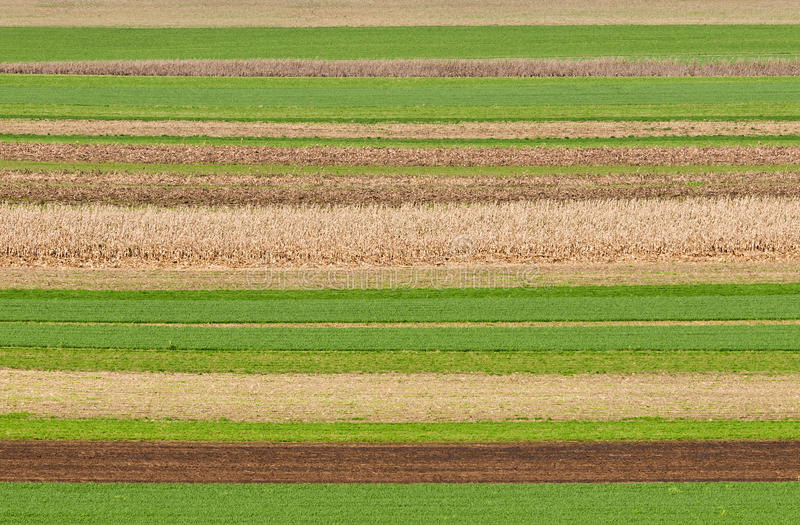 śródpolni wzory obraz stock