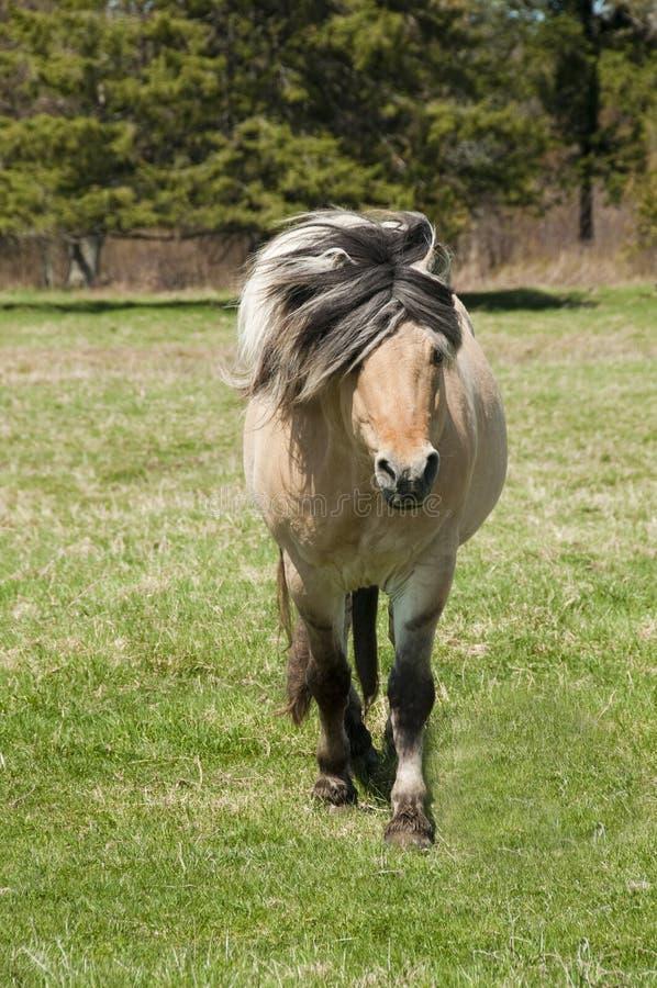 śródpolny koń obraz stock