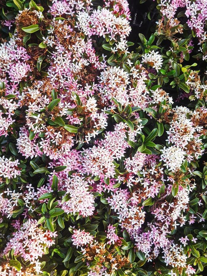 Śródpolny kwiatu wzór fotografia stock