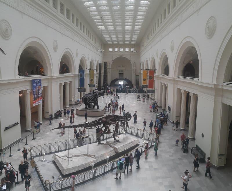 Śródpolny muzealny Chicago obraz stock