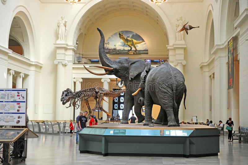 Śródpolny muzeum historia naturalna w Chicago zdjęcie stock