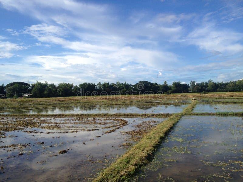 śródpolny ryżowy tajlandzki zdjęcia royalty free