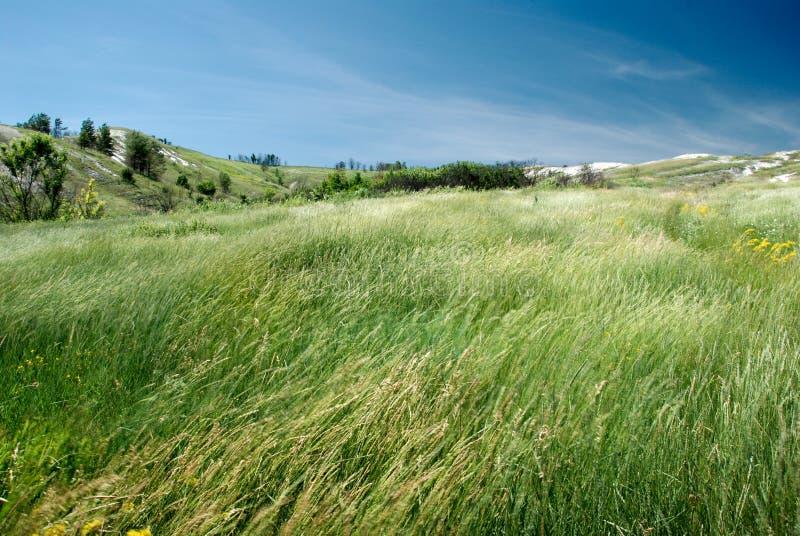 śródpolny wiatr fotografia stock