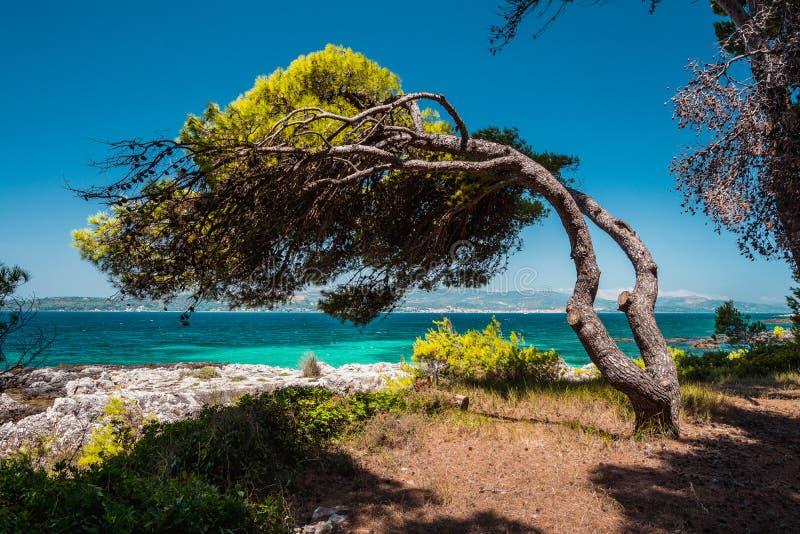 Śródziemnomorski krajobraz z sosną na wybrzeżu zginającym w kierunku morza od wiatru, szmaragd zatoki i jasny wody, obrazy stock